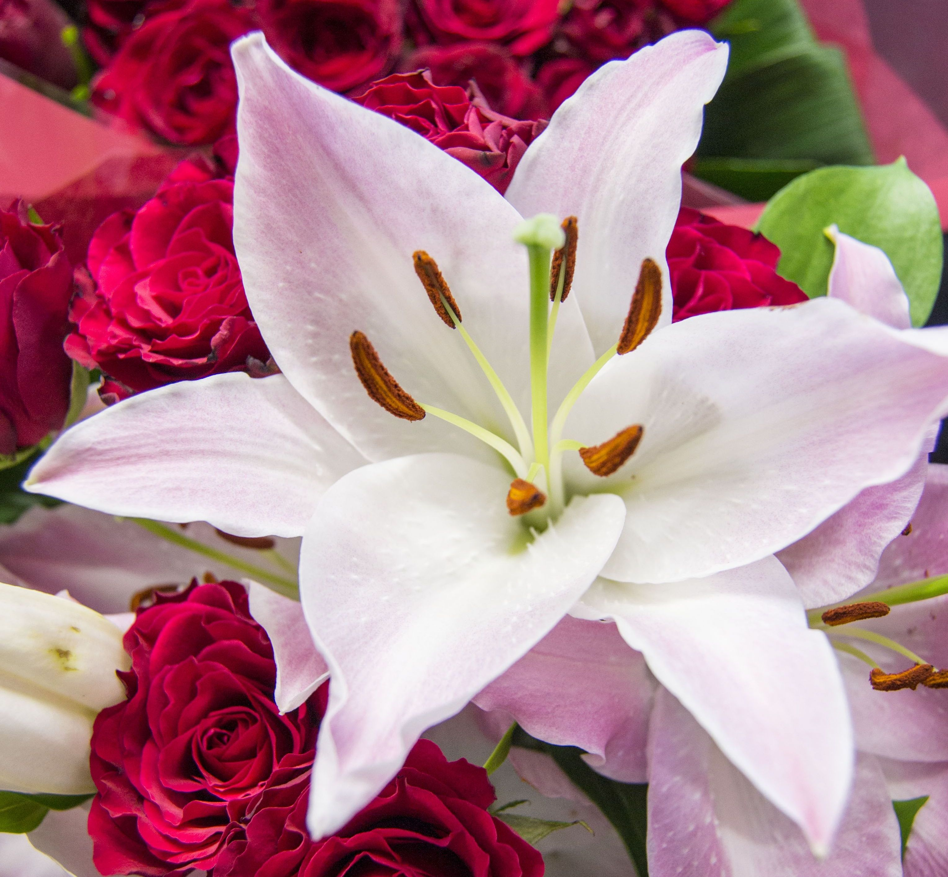 types of lilies  flower pressflower press, Beautiful flower