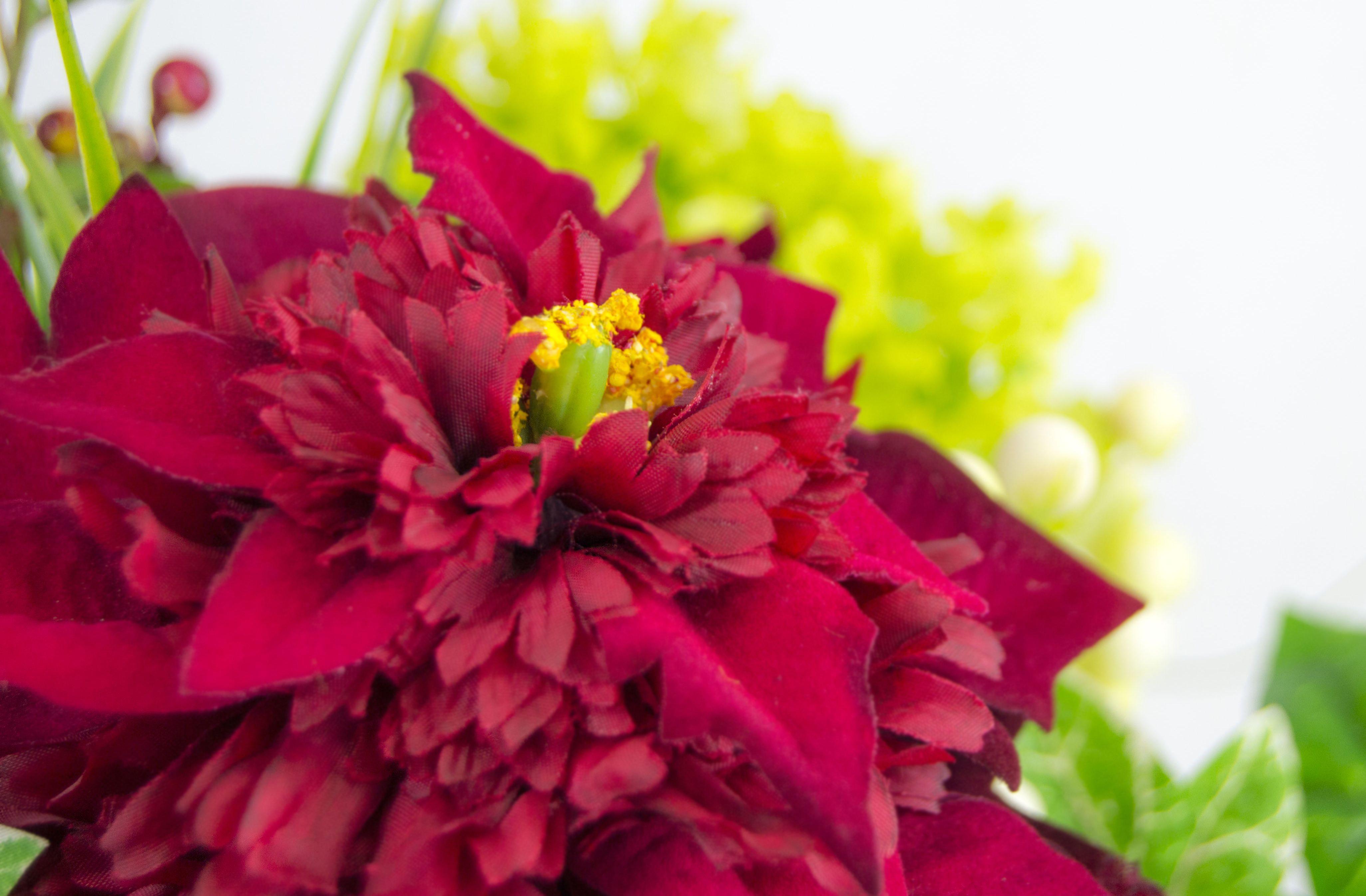christmas poinsettias diy Archives Flower PressFlower Press