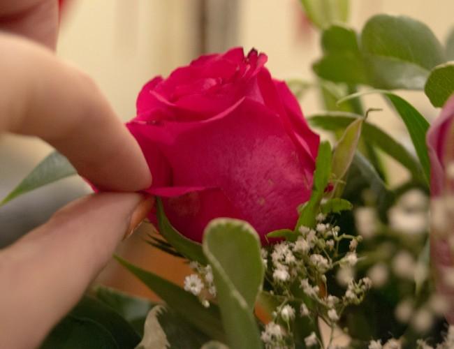 Remove Guard Petals Roses