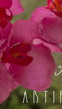 care tips for your iris bouquet flower pressflower press. Black Bedroom Furniture Sets. Home Design Ideas
