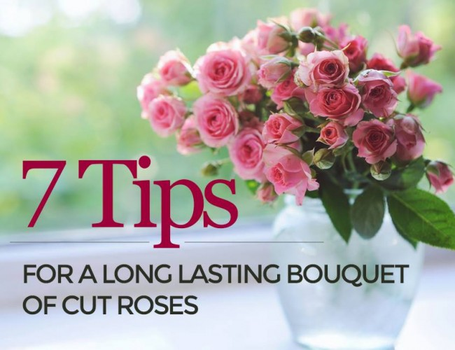 Fresh Cut Roses 7 Care Tips
