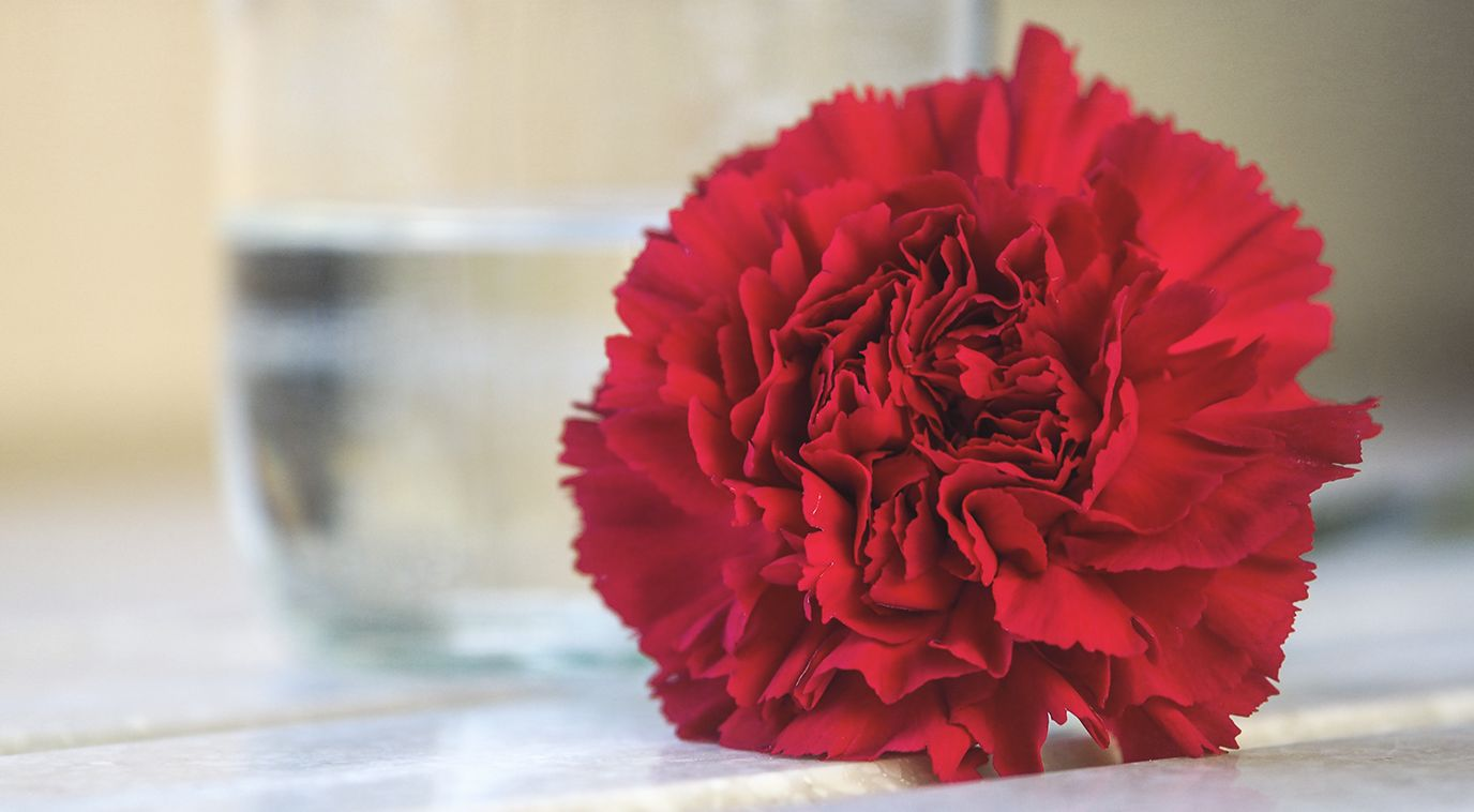 top valentine's day flowers | flower pressflower press, Ideas