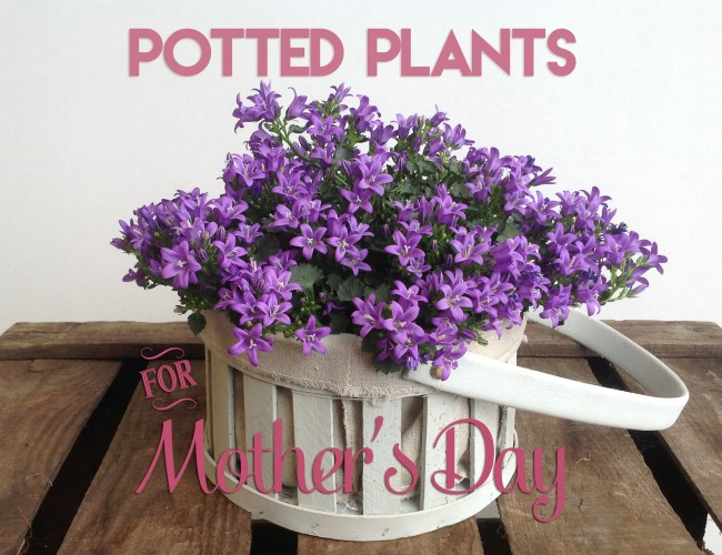 MOTHERS DAY POTTED PLANTS2
