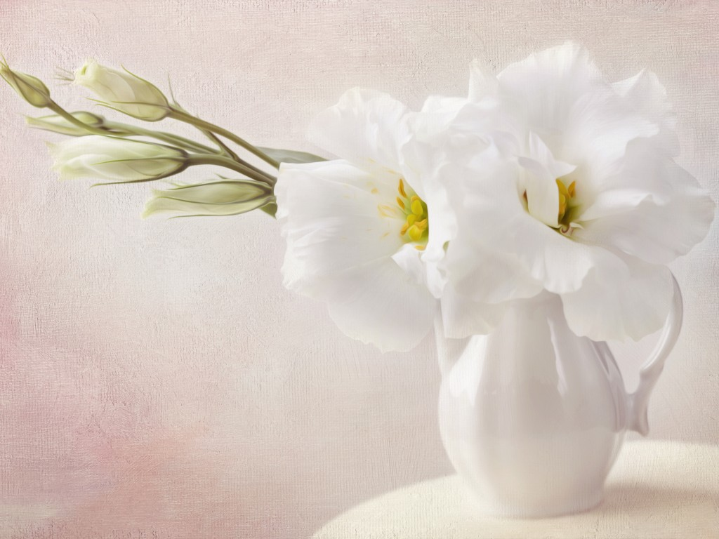 Different Kinds Of Flowers Available In White