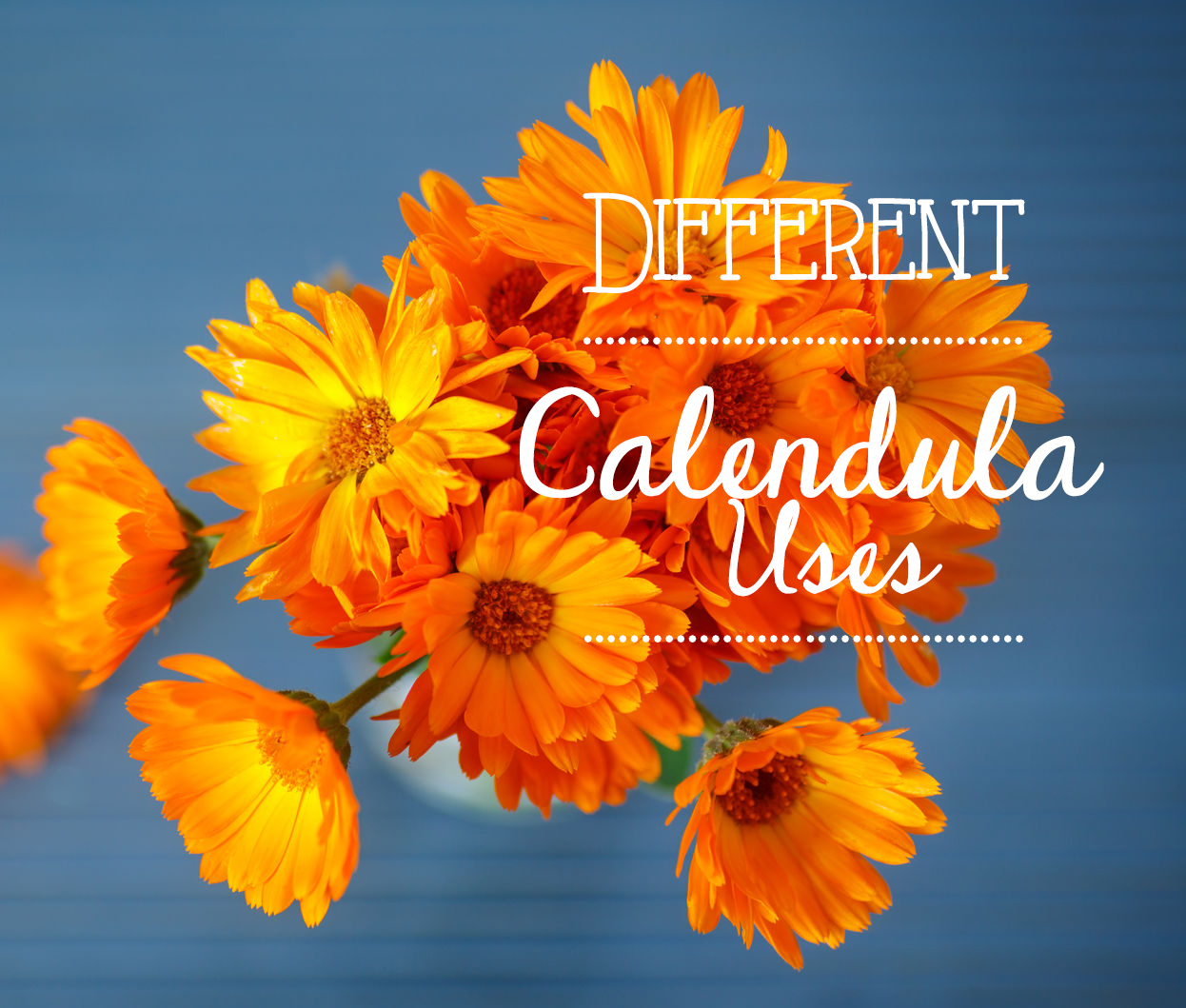 Different uses for calendula health beauty calendula is also known as a pot marigold and it has been proven to have a number of uses over the years while your local and online florist usually stock izmirmasajfo
