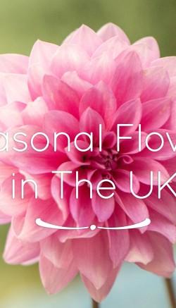 Seasonal Flowers In The UK