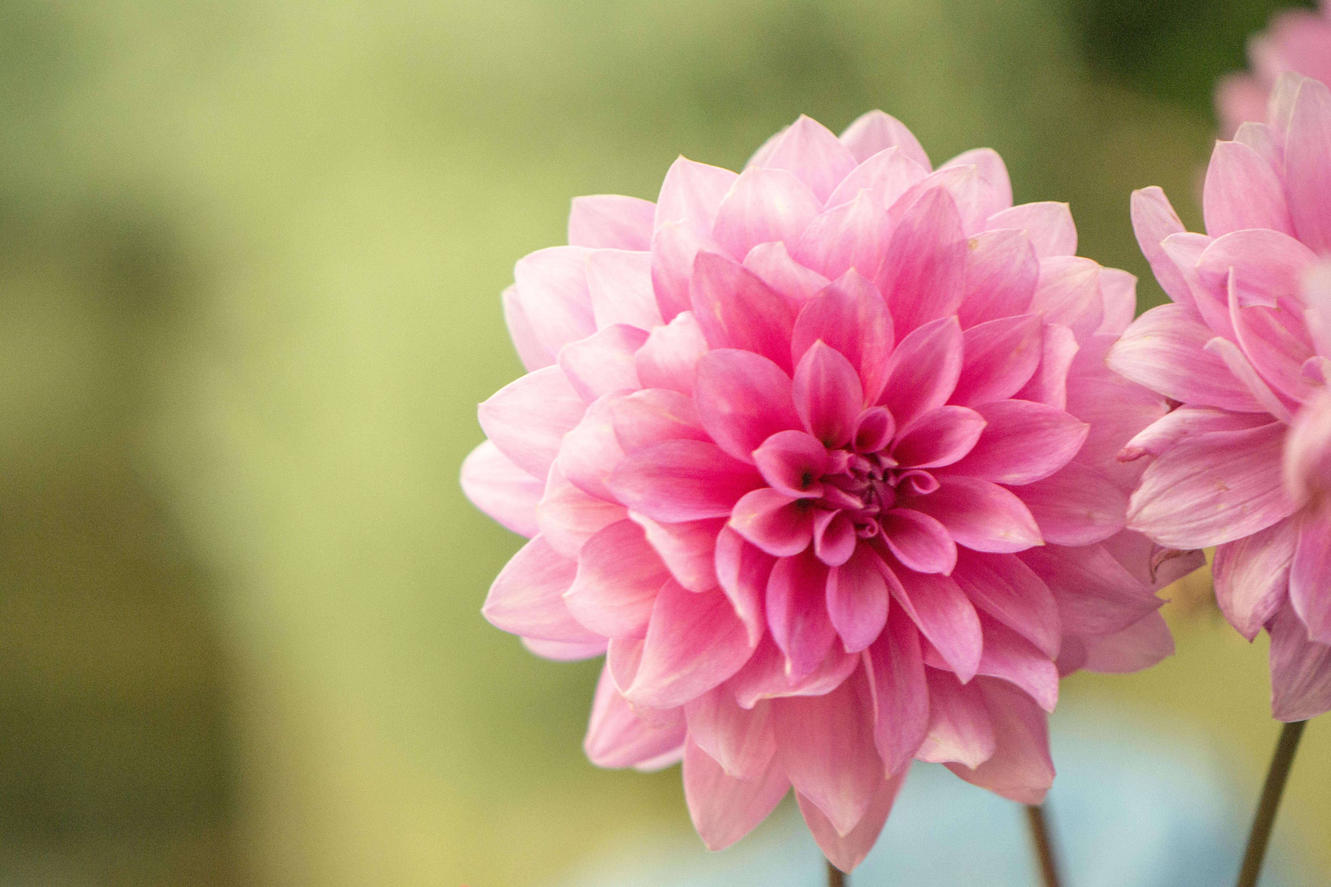 British Seasonal Flowers Flower Press