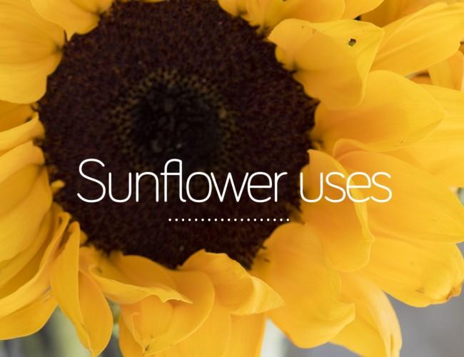 Sunflower Uses