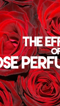 The Effect Of Rose Perfume
