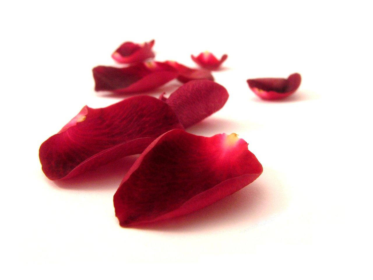 Preserve rose petals for a romantic occasion Flower PressFlower Press