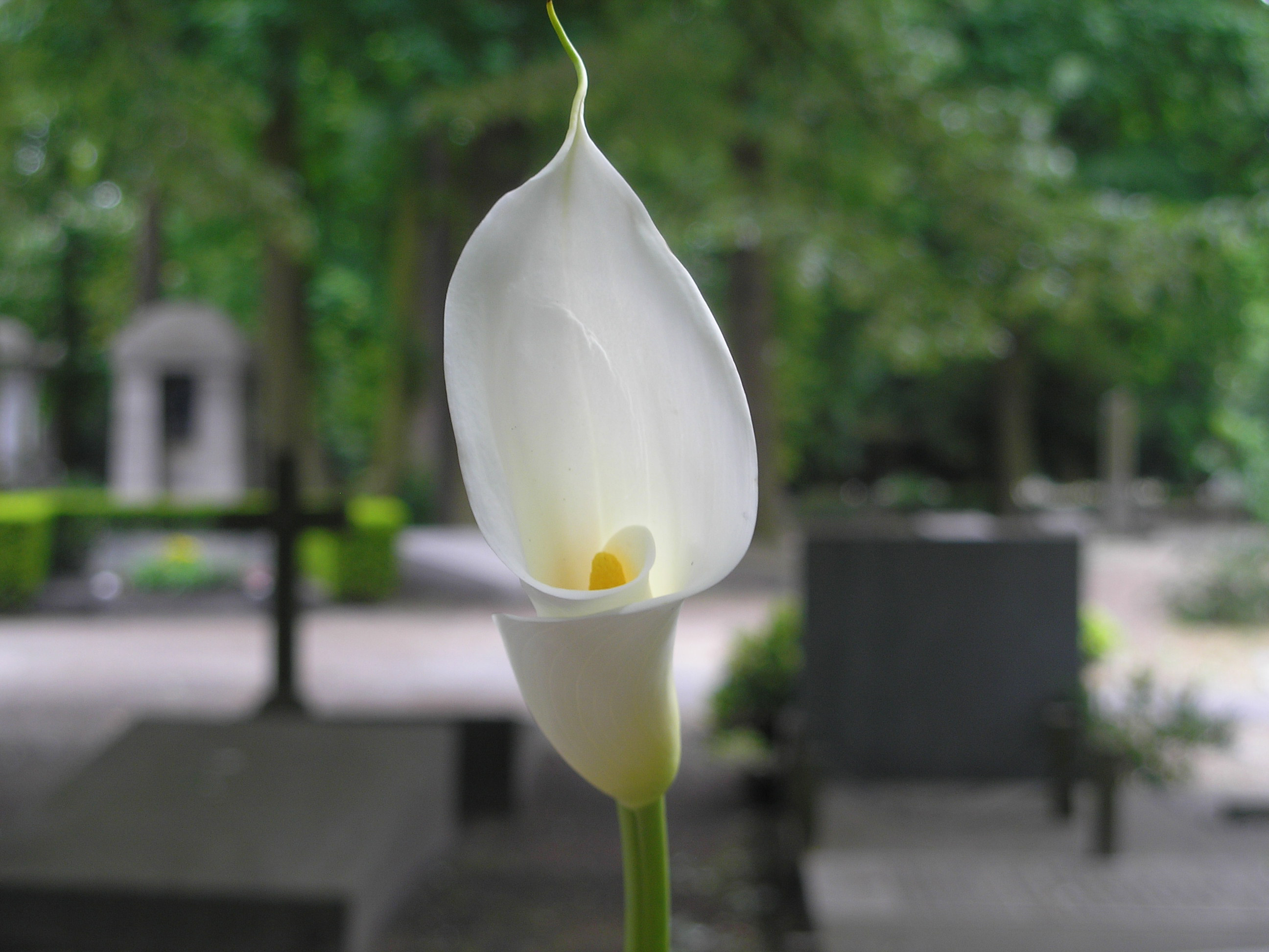 Flowers symbolically suited for funerals