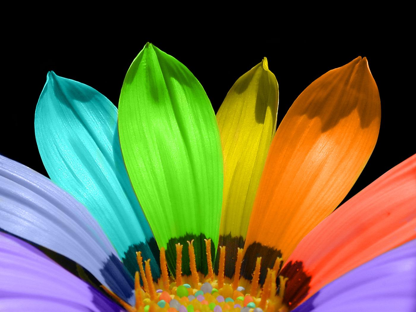 Flower Colour Meanings Flower Press