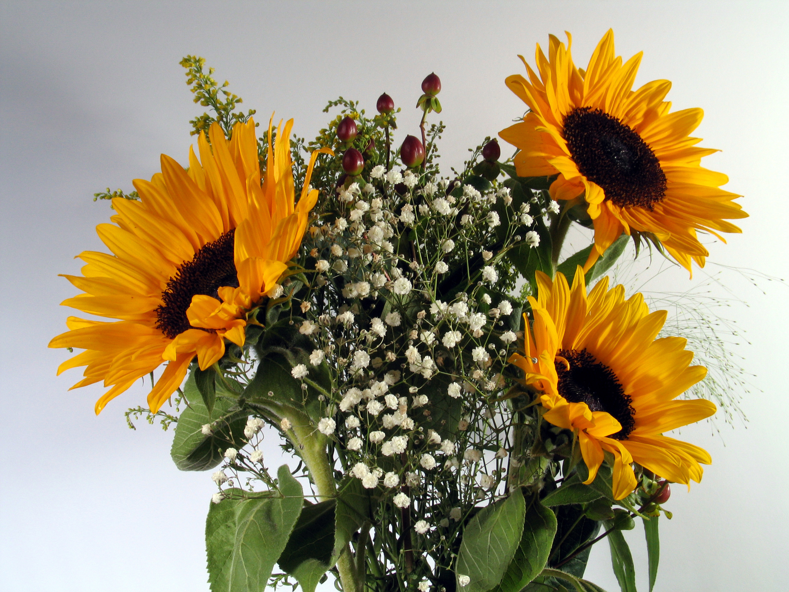 Tips for sending flowers to hospitals flower press flowers for hospitals izmirmasajfo