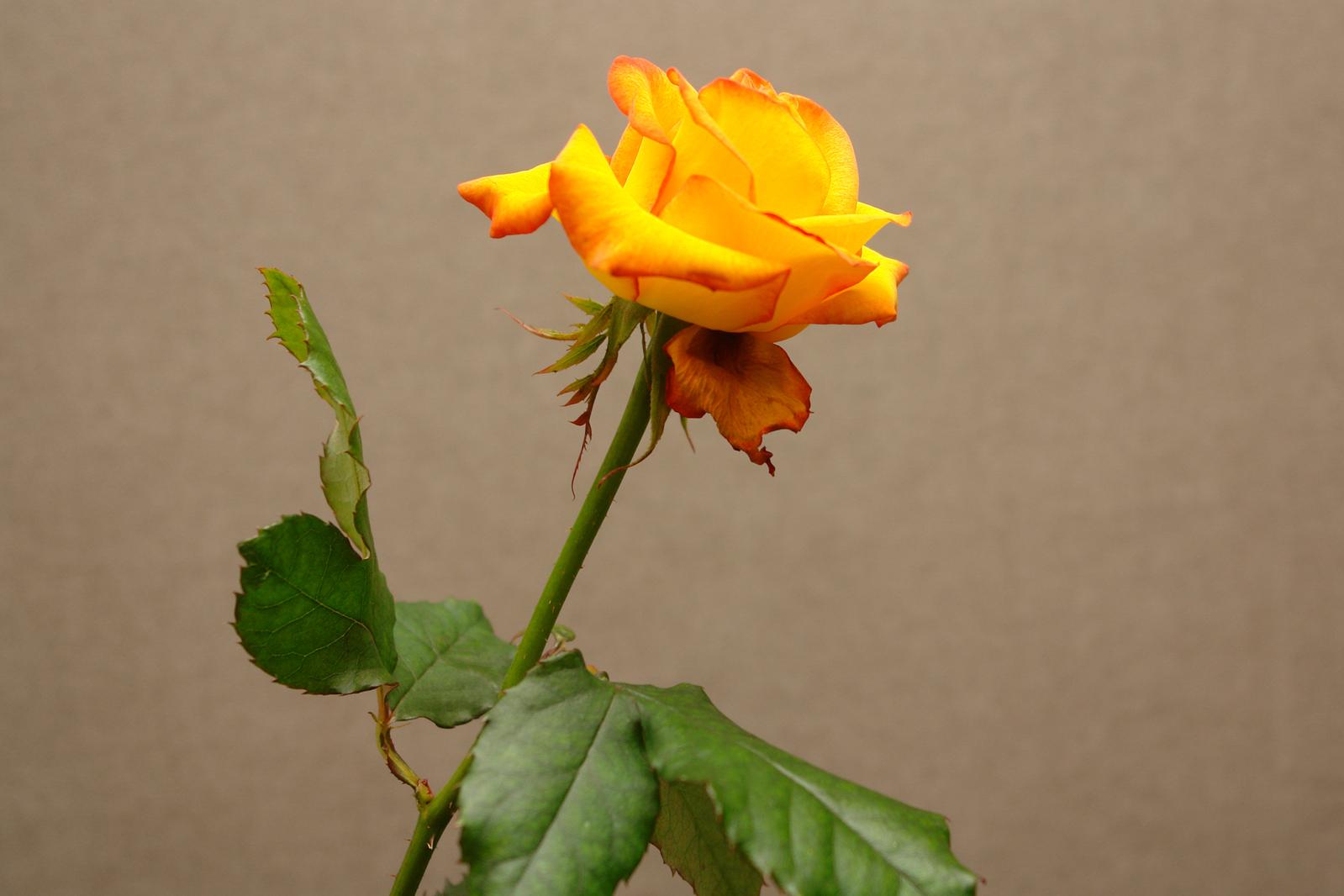 Dont Let A Single Flower Go To Waste Flower Pressflower Press