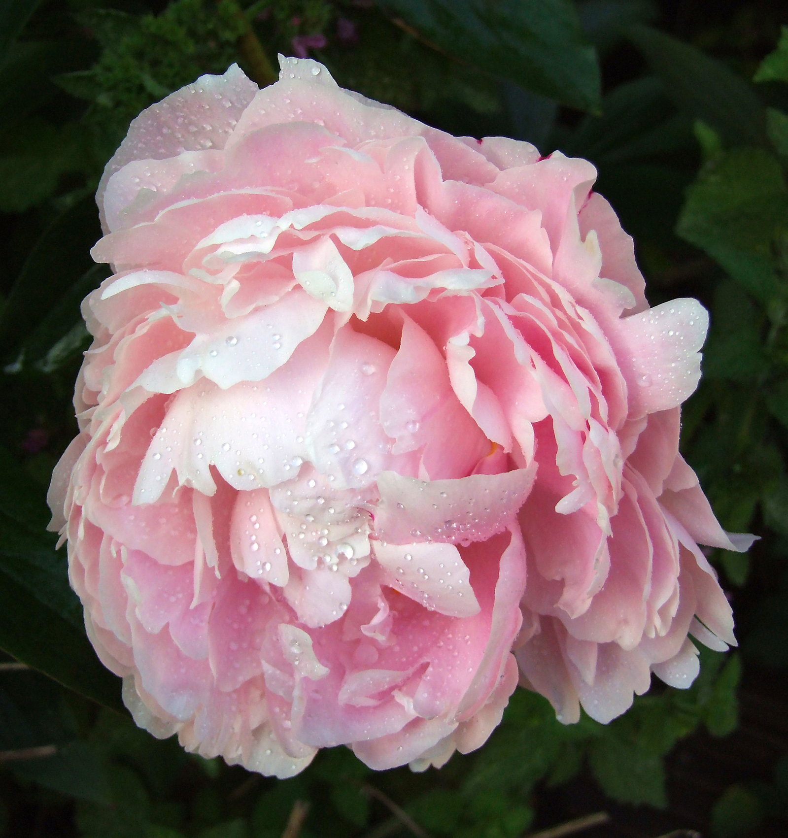 Practical advice for silk flower arranging flower pressflower press how to arrange silk flowers mightylinksfo