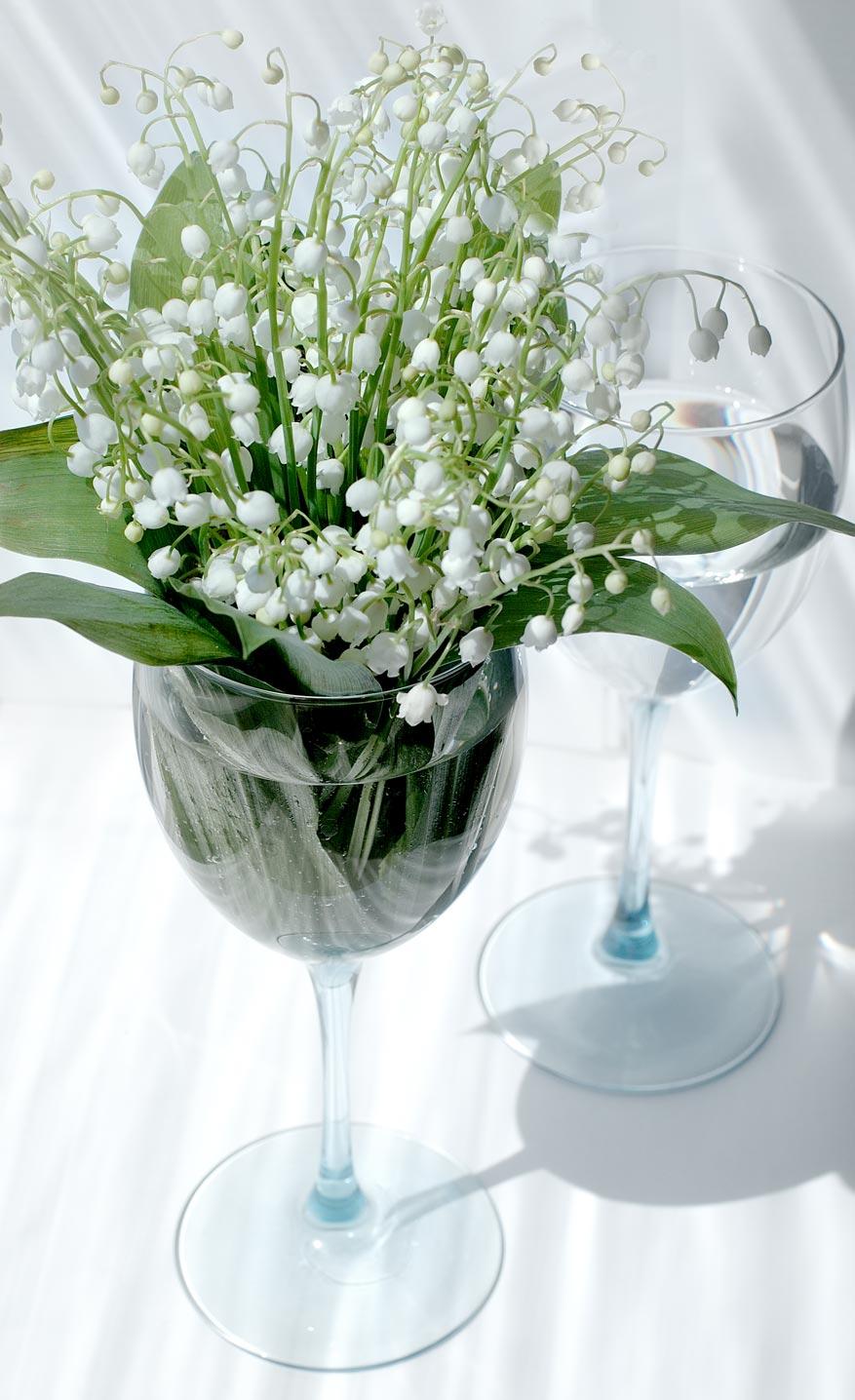 Using glasses as vases flower pressflower press displaying flowers in glasses reviewsmspy