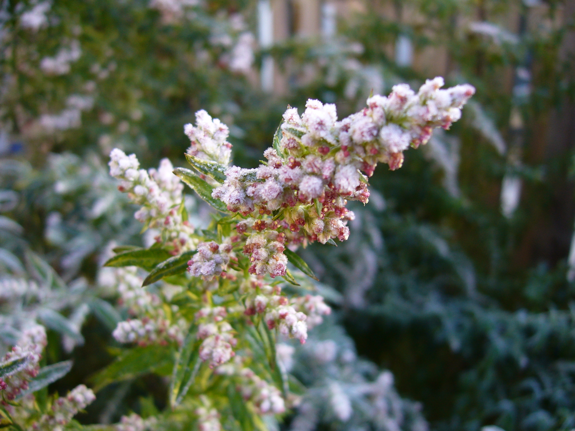 Preparing your garden for winter flower pressflower press - Prepare garden winter ...