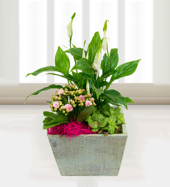 Use plants to improve the air in your home flower pressflower press - Plants can improve ambience home ...