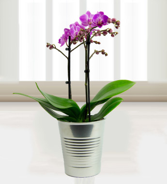 How to care for your potted orchids flower pressflower press - How to care for potted orchids ...