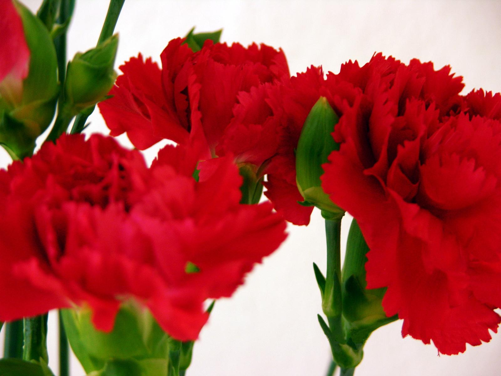 Reasons to send flowers for valentine s day flower