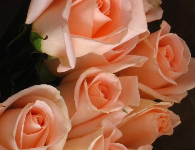 Tips for choosing the best flowers