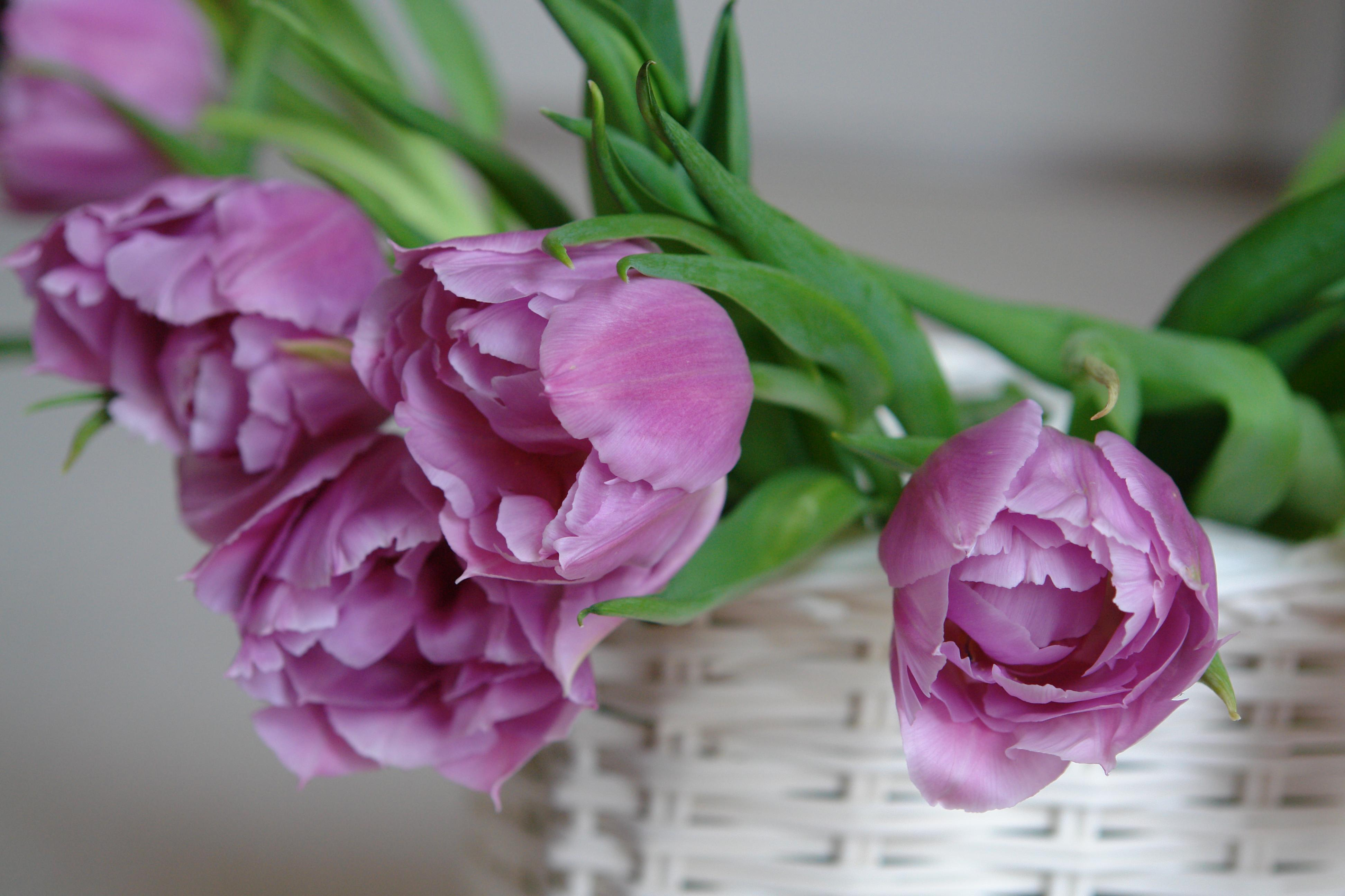 Where to display flowers in your home