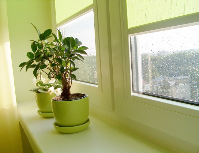 Where to display house plants