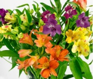 3 flower care mistakes