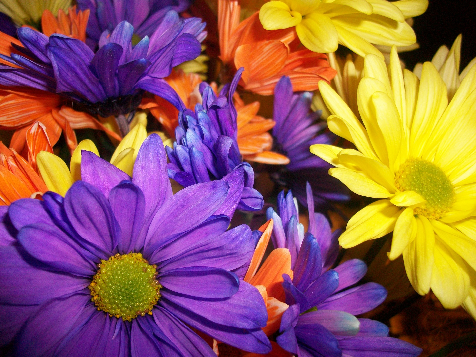 birth flower for the month of april flower press