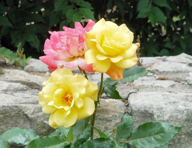 Hybrid flowers