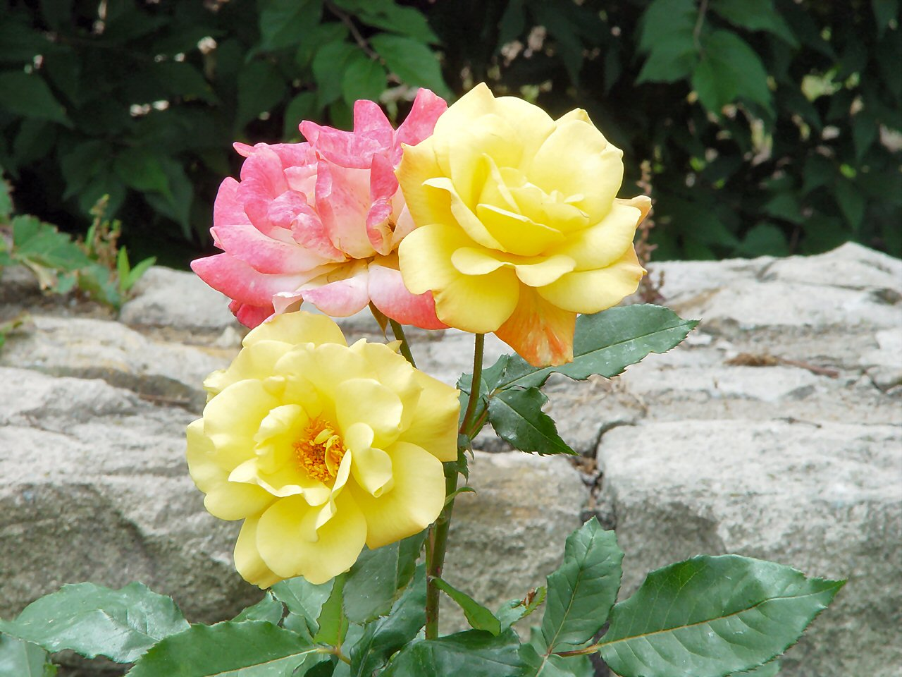 Hybrids That Offer The Best Of Both Worlds Flower Pressflower Press