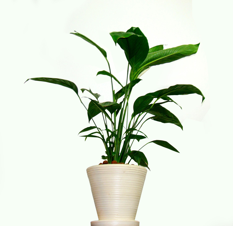 Plant - HD2224×2156