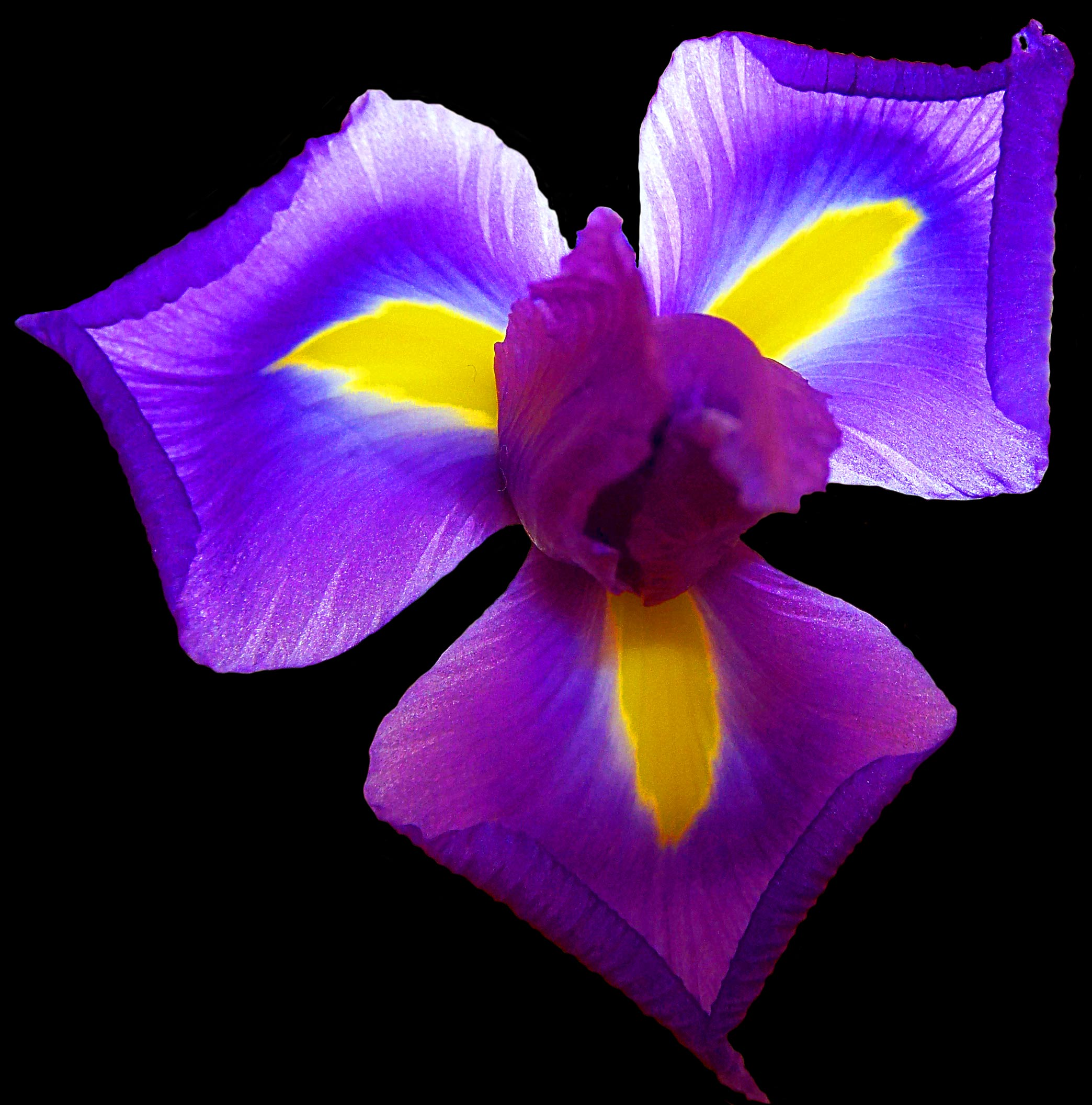 Keep your iris bouquet beautiful flower pressflower press iris flower care izmirmasajfo