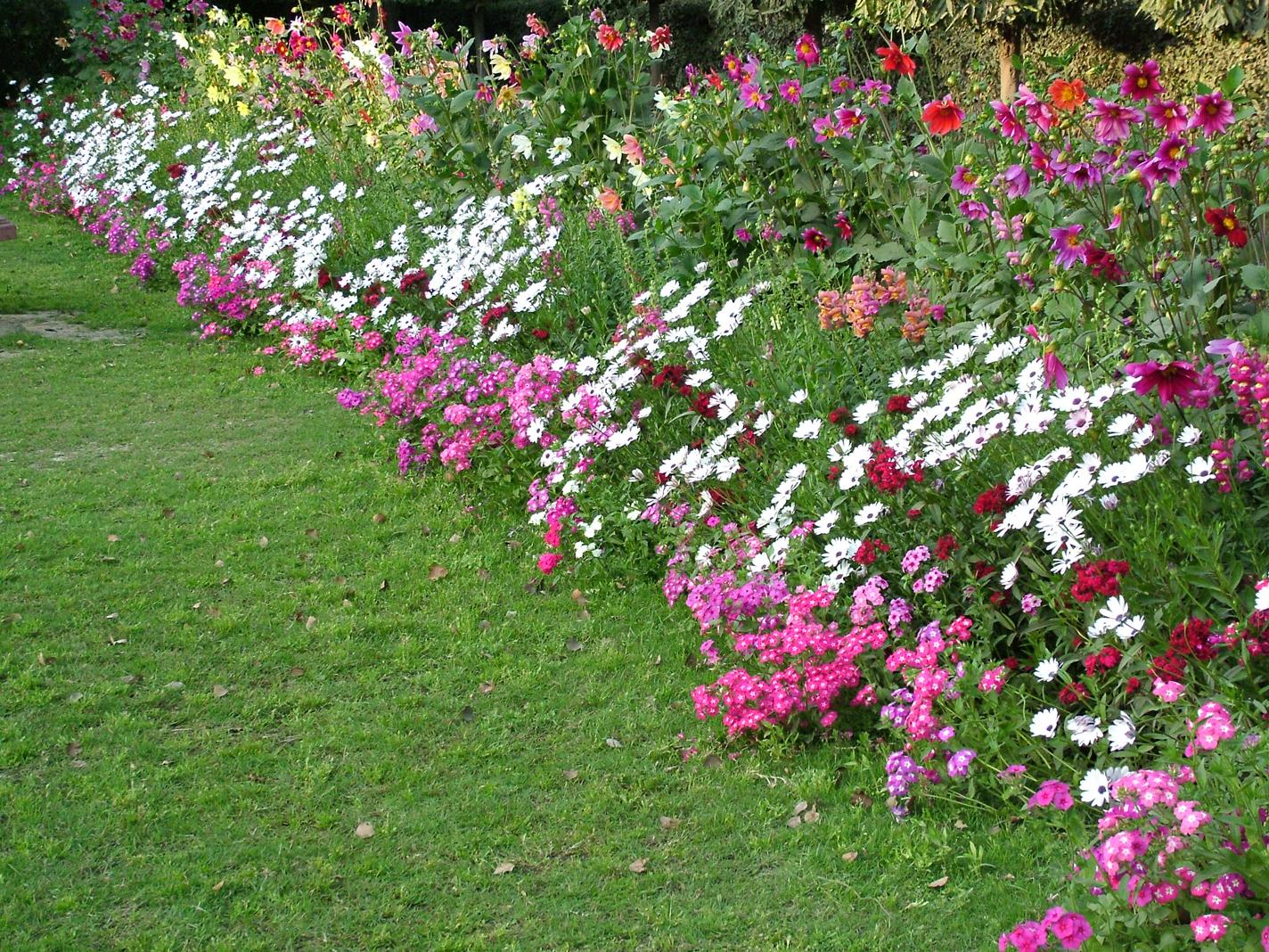 Flower Bed Care Tips Flower Pressflower Press
