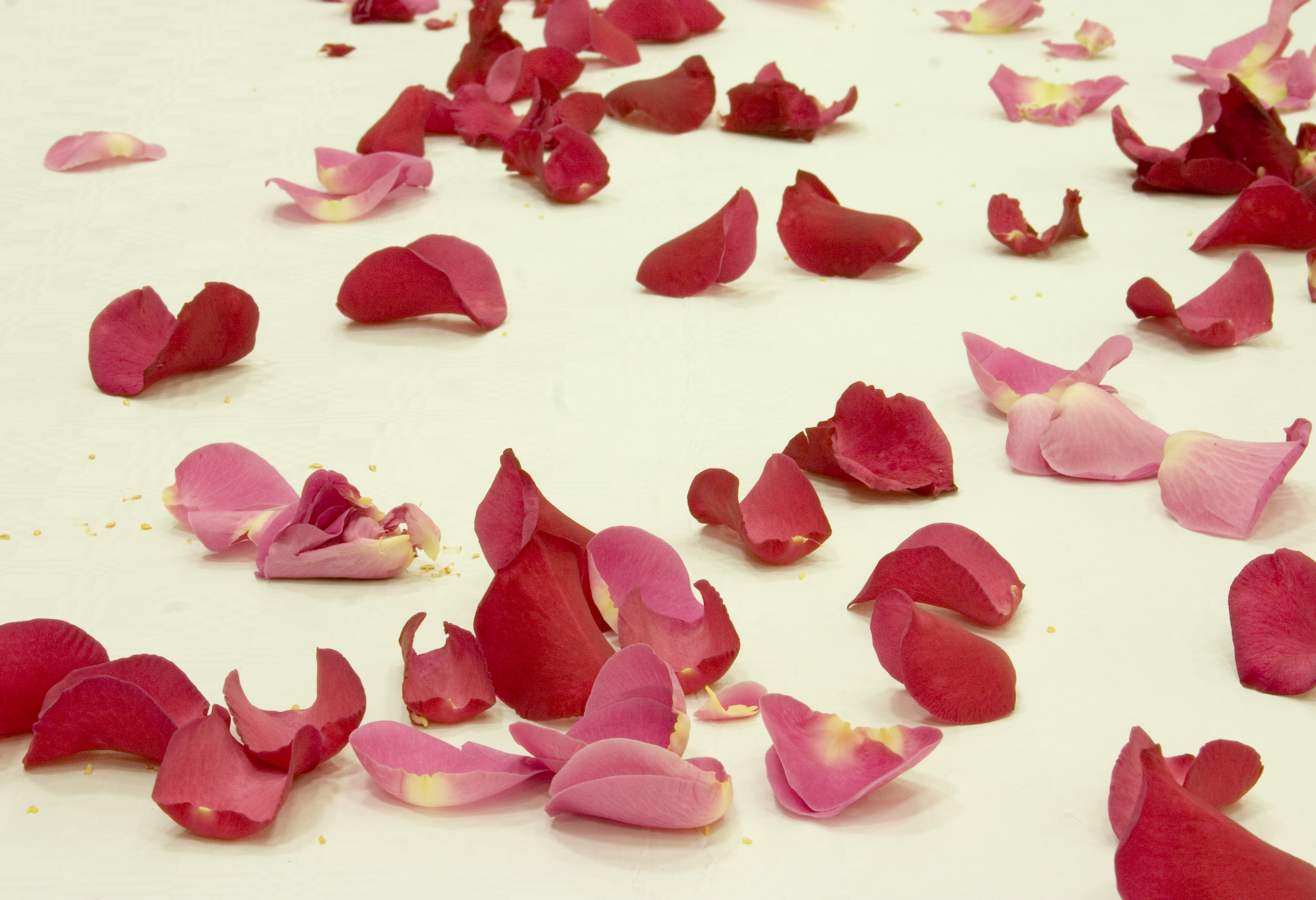 Make Your Very Own Rose Petal Jam Flower Press