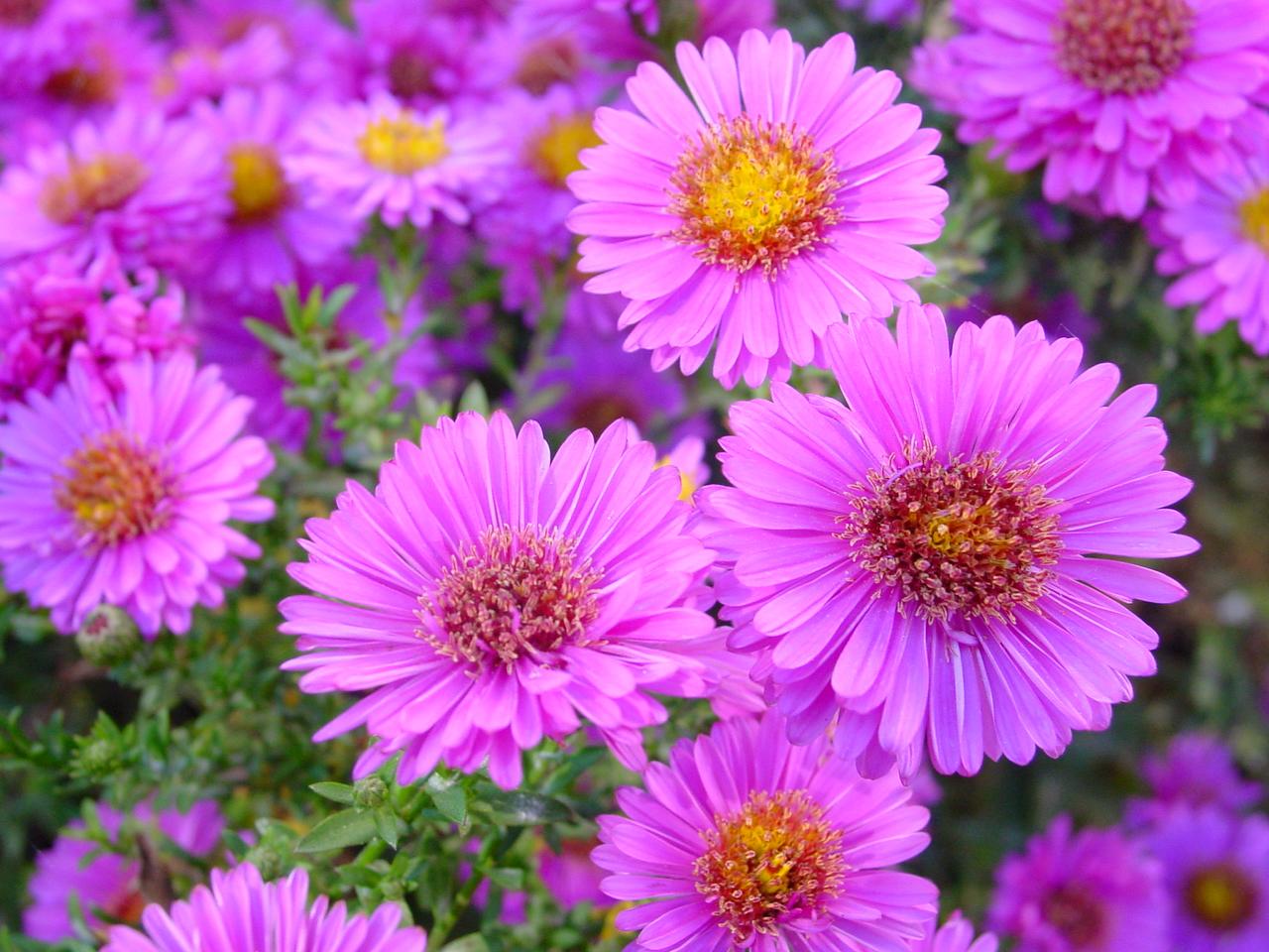 Fresh flowers for summer Flower PressFlower Press