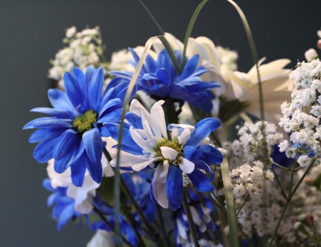 Cool summer flowers