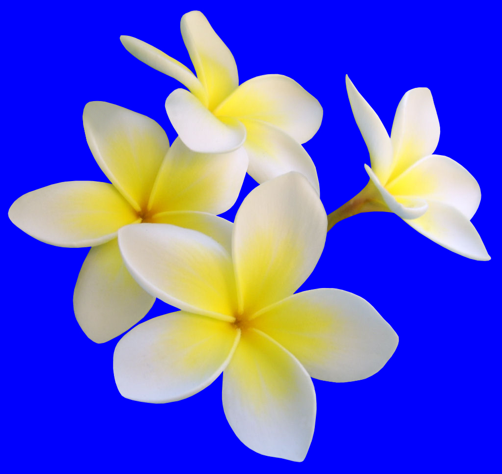 Exotic flowers archives flower pressflower press hawaiian style floral design izmirmasajfo