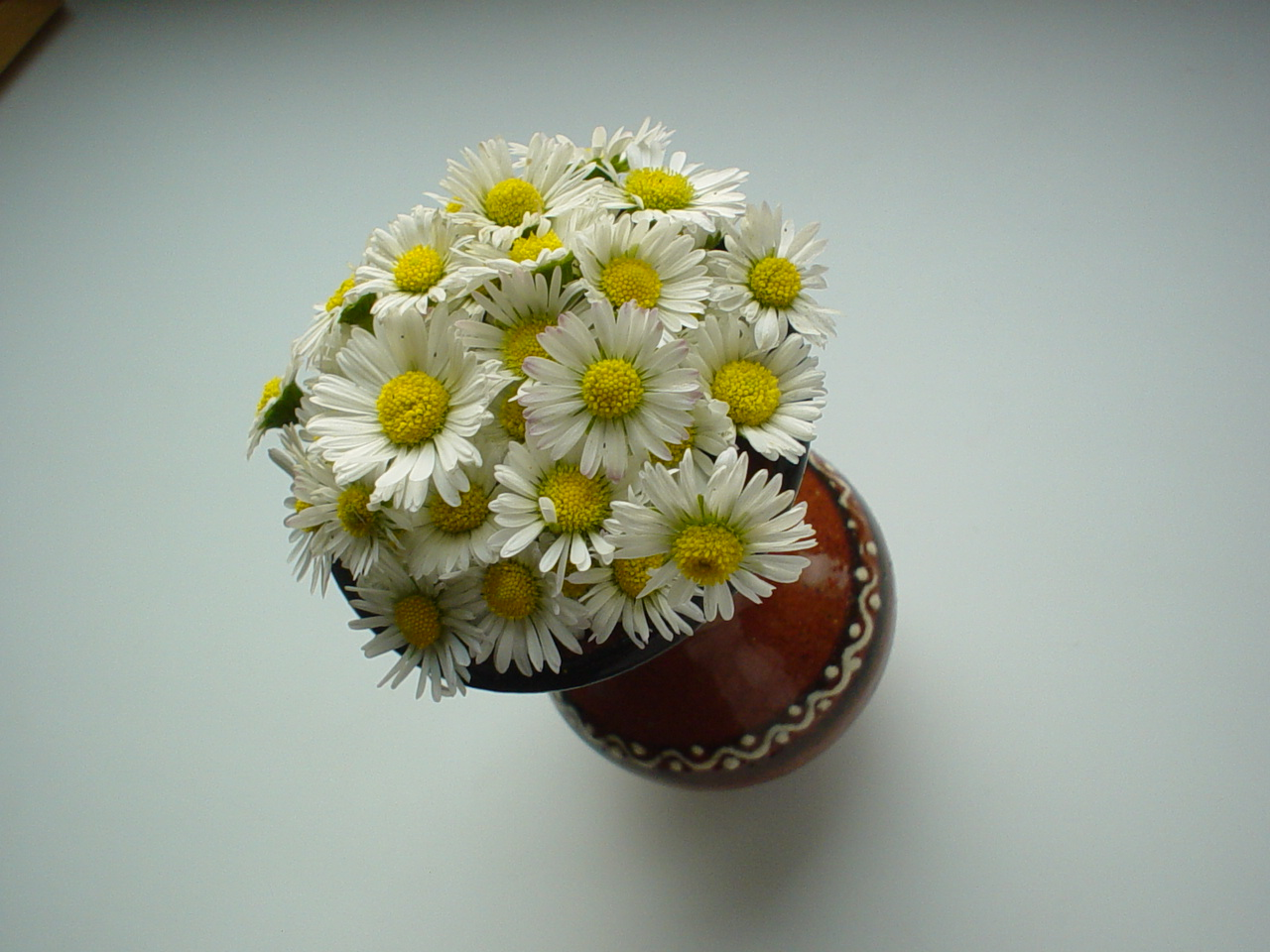 Whats Not To Love About Daisies Flower Press