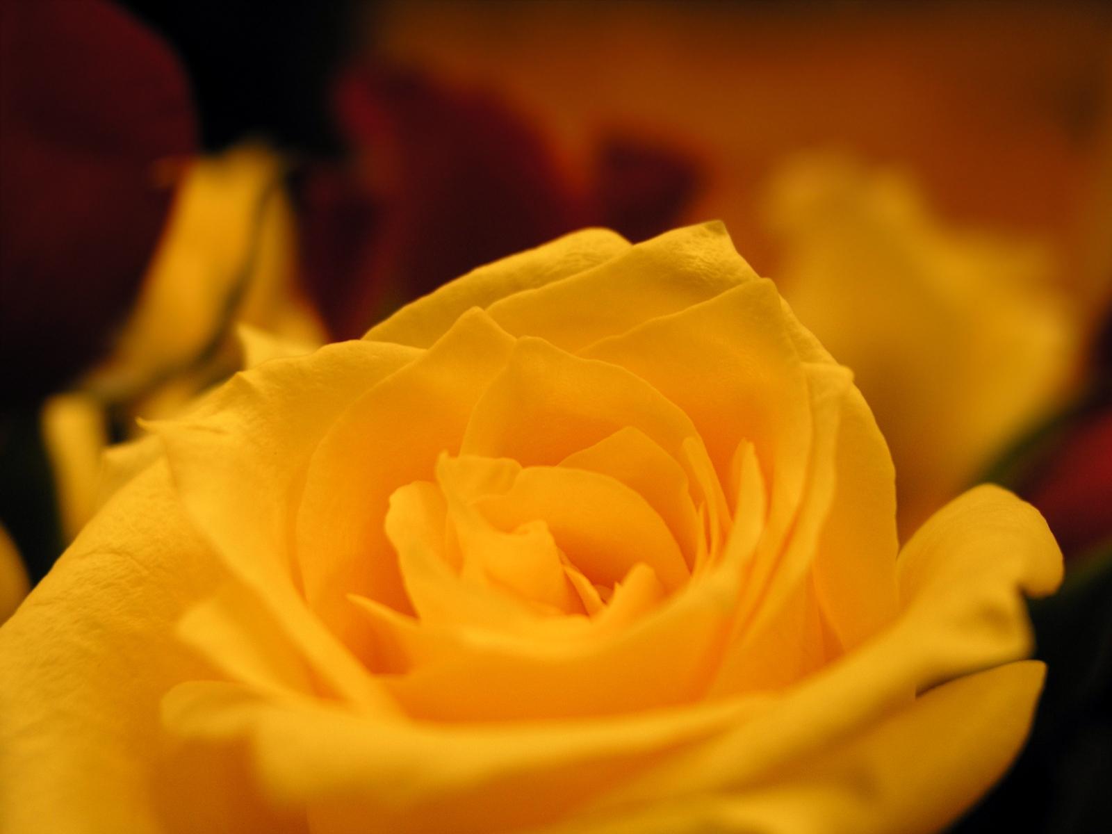 Yellow Wedding Flowers For Summer Flower Press