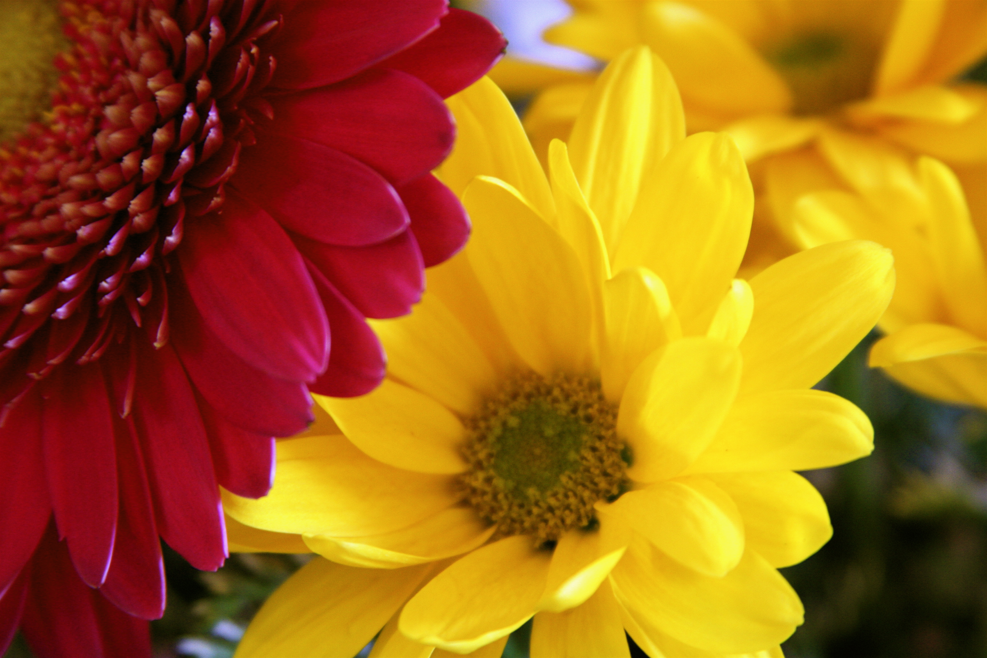 What types of flowers to send for a birthday