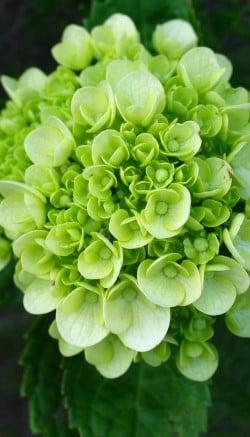 Green flower trend