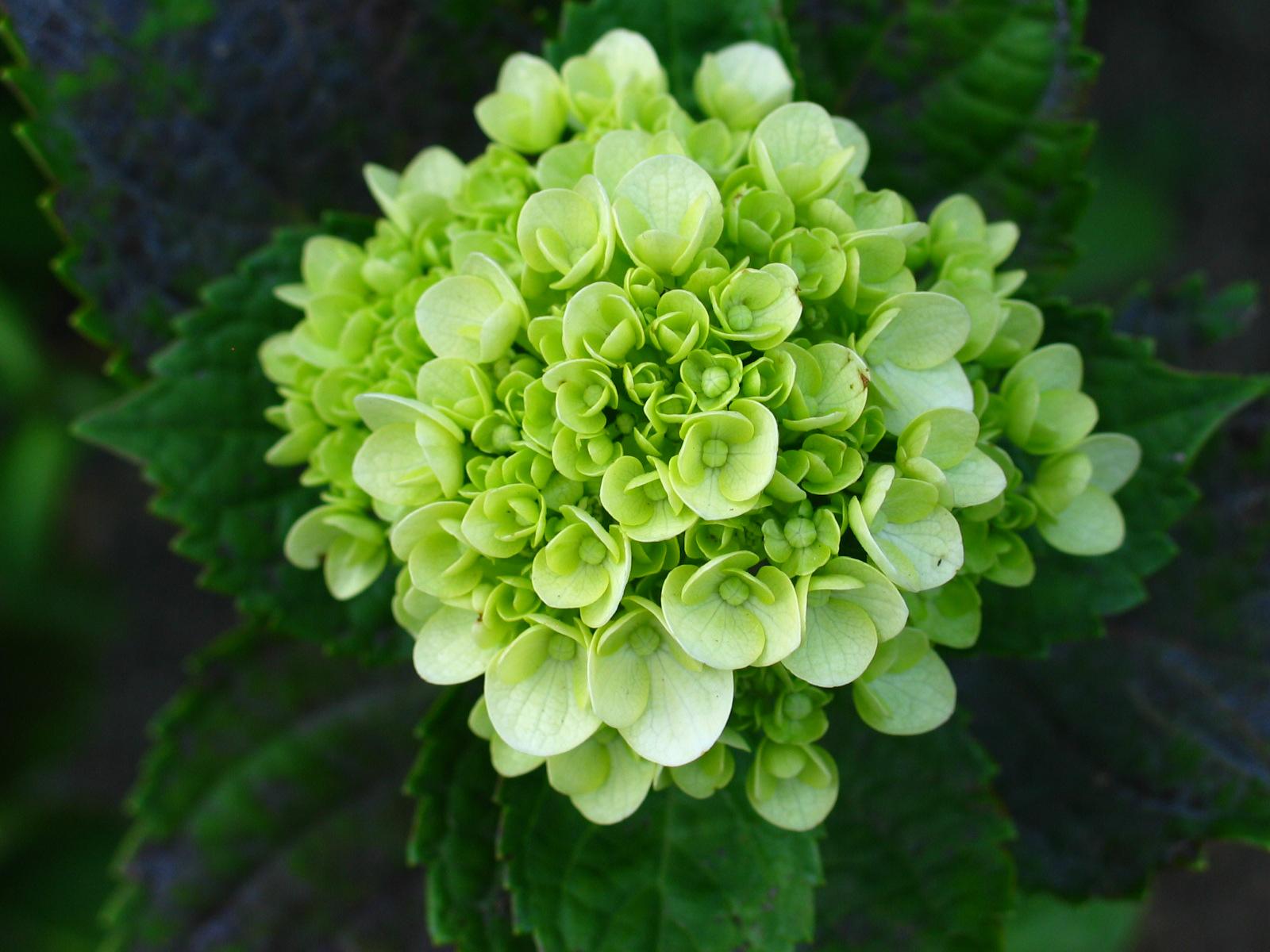 This year s popular green trend Flower PressFlower Press