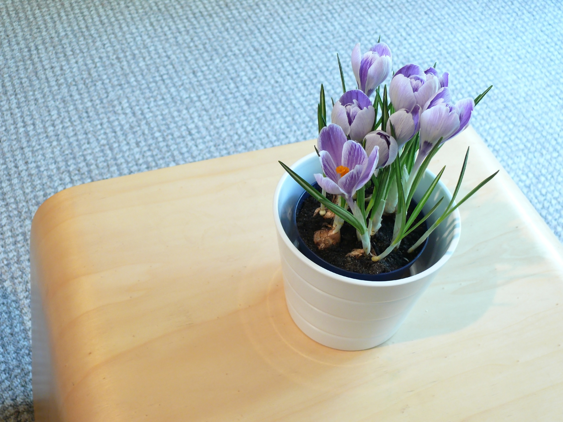 Flowers make your office more appealing to clients