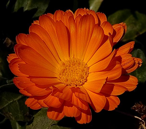 Superb October birthday flower ideas