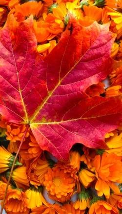 Autumn flower napkin rings