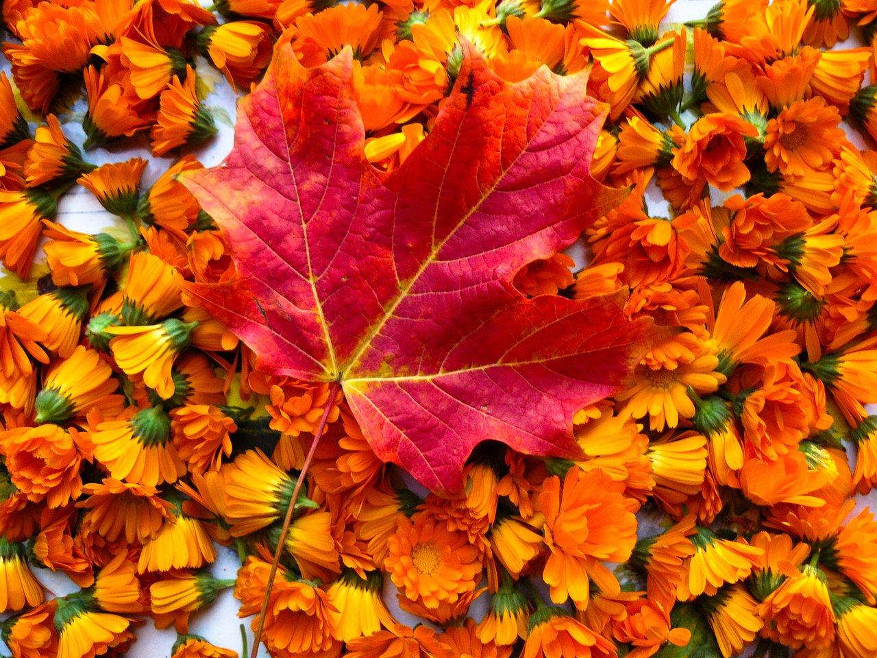 napkin rings inspired by autumn flowers flower press