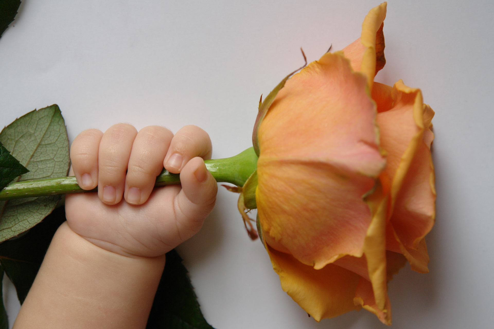 Baby names inspired by flowers - Flower Press