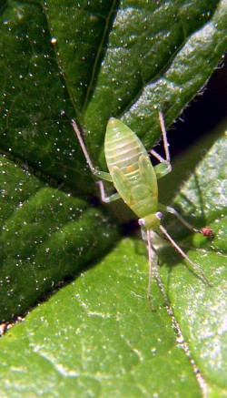 Get rid of bugs on your plants