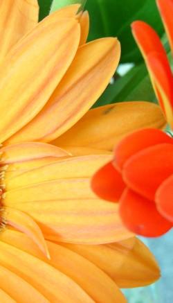 How to make a colander flower arrangement